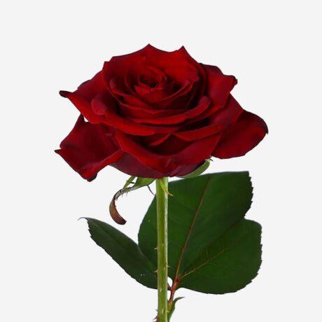 Российская роза поштучно