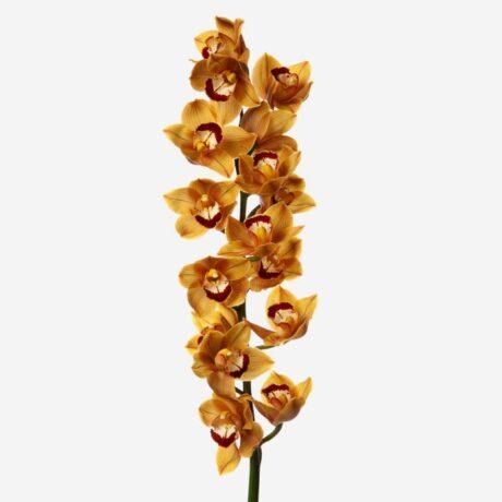 Оранжевая ветка орхидеи